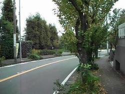 道路1.jpg